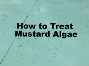 This is a thumbnail for an article about treating mustard algae.